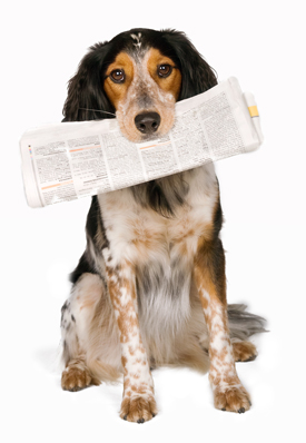 published-work-dog-paper